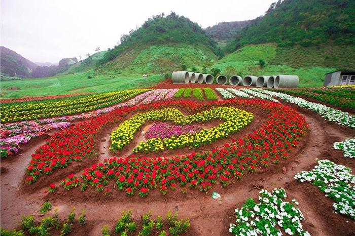 Vườn hoa trái tim ở Mộc Châu Happy Land