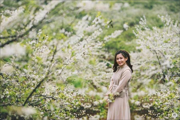Hoa mận nở trắng trời Mộc Châu mùa xuân