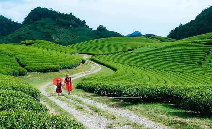Cao nguyên Mộc Châu có khí hậu mát mẻ quanh năm
