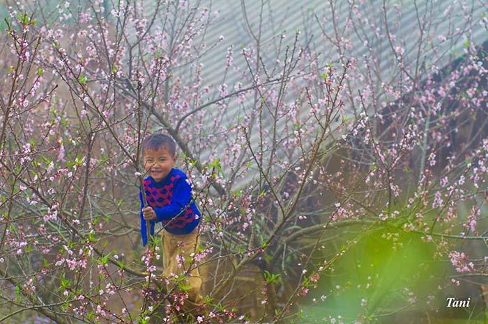 Mùa hoa đào Mộc Châu