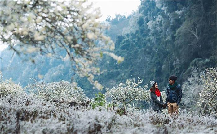 Mùa hoa mận Mộc Châu thu hút rất nhiều bạn trẻ đến chụp ảnh