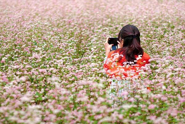 Không được giẫm lên những luống hoa của người dân