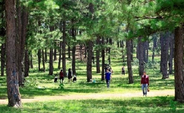 Du khách đưa nhau đến rừng thông bản Áng ngắm cảnh