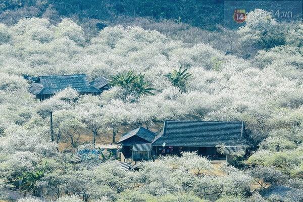 Địa điểm ngắm hoa mận tại Mộc Châu đẹp