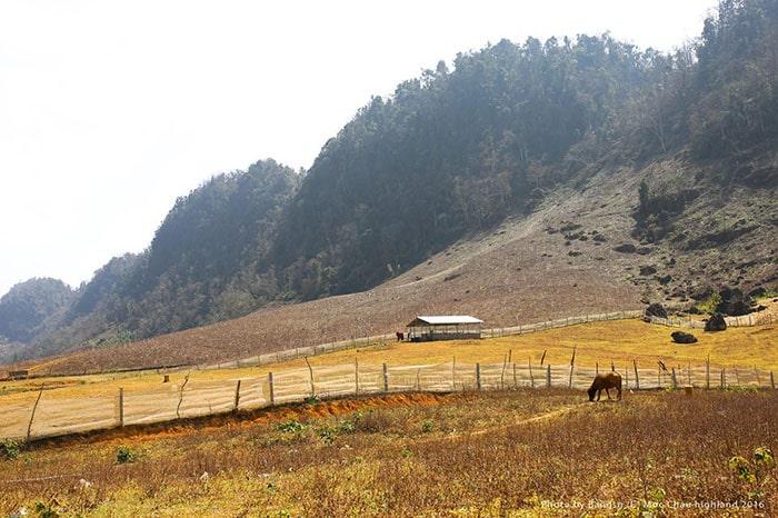 Vẻ đẹp yên bình của thảo nguyên Mộc Châu