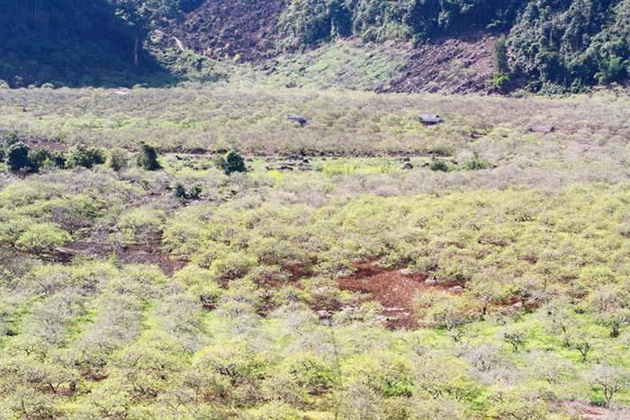 Thung lũng mận Nà Ka - Mộc Châu