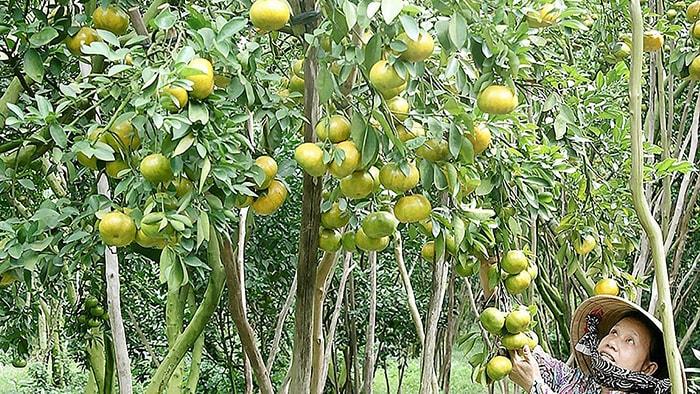 Vườn trái cây 99, Bình Dương