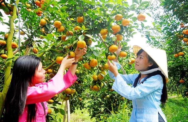 Vườn trái cây Mỹ Khánh, Cần Thơ