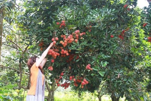 Vườn trái cây Nam Nhi, Lâm Đồng