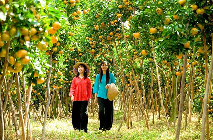Vườn trái cây Cái Mơn, chợ Lách