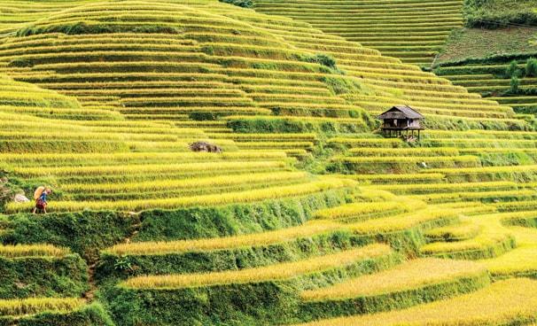 Bạn có thể đến Pù Luông vào tháng 9, tháng 10 để được ngắm những cánh đồng lúa chín vàng
