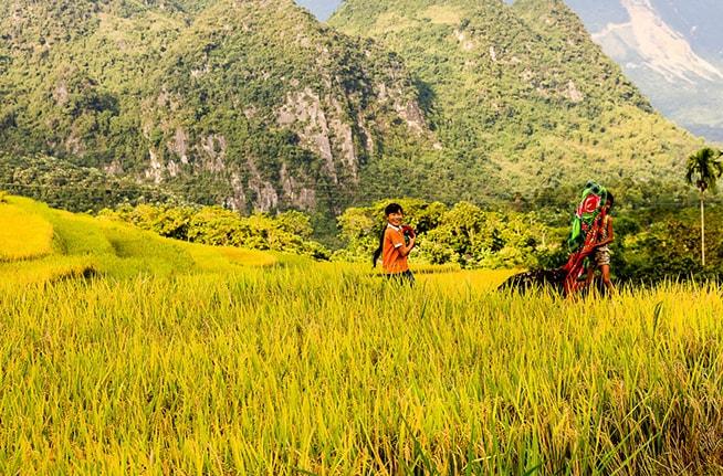 Bạn có thể ngắm nhìn bao quát những ruộng lúa chín vàng khi chinh phục đỉnh Pù Luông