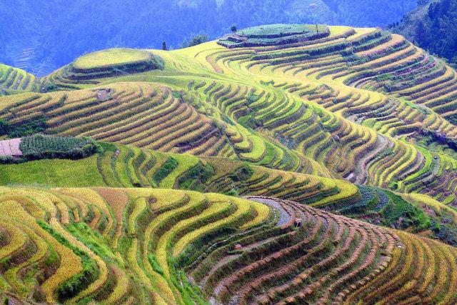 Đến với Pù Luông bạn có thể chiêm ngưỡng những cánh đồng lúa ruộng bậc thang xanh mướt
