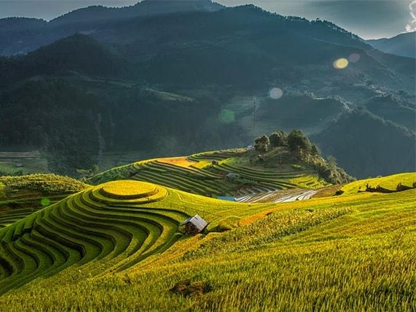 Bản Lìm Mông - vẻ đẹp mê hồn ruộng bậc thang mùa lúa chín 5