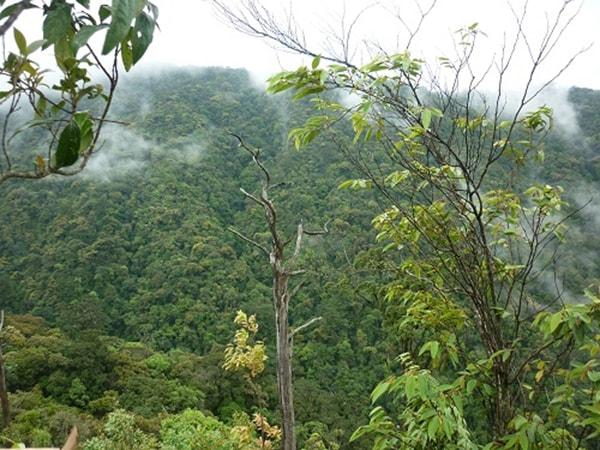 Chế Tạo - khu bảo tồn loài lớn nhất Việt Nam 4