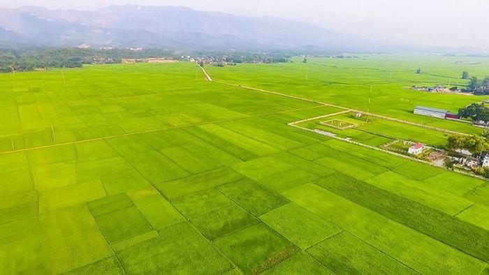 Cánh đồng Mường Thanh, Điện Biên