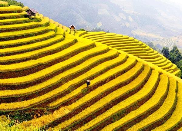 Ruộng bậc thang Mù Cang Chải - thắng cảnh nổi tiếng Tây Bắc