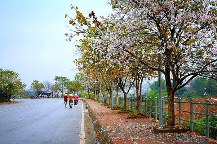 Mùa hoa ban ở Điện Biên thường nở vào tháng 3