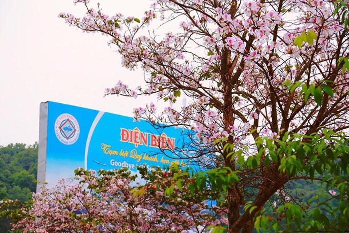 Phượt Điện Biên ngắm hoa ban vào tháng 3