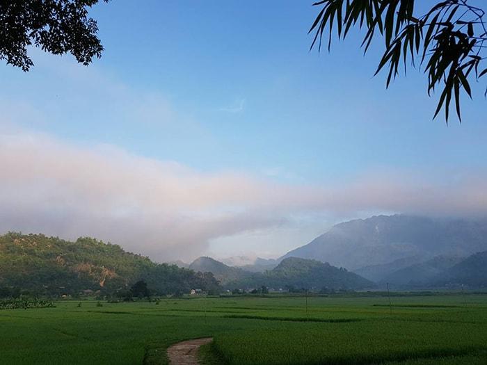 Cánh đồng lúa nếp xanh mướt tại bản Lác, Mai Châu
