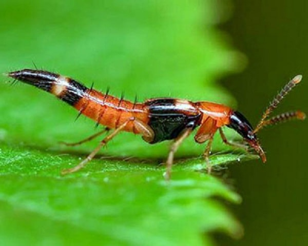 Phân biệt zona thần kinh, bệnh giời leo và kiến ba khoang đốt 4
