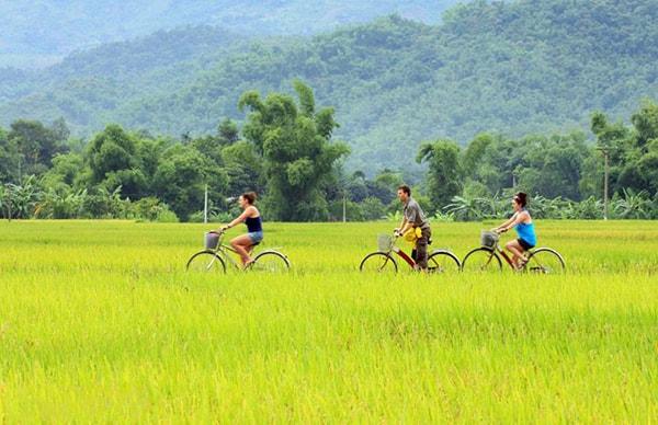 Đạp xe băng qua những cánh đồng lúa chín vàng óng vào mùa thu hoạch