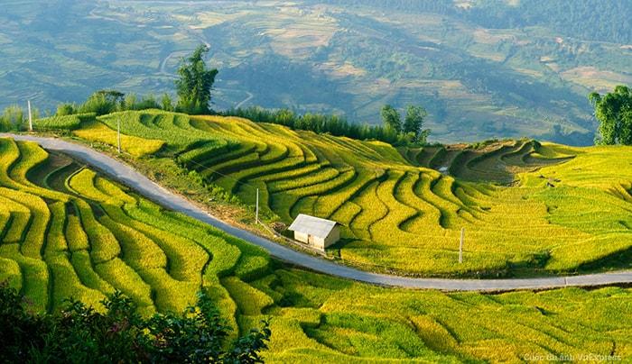Mùa lúa chín trên Hoàng Su Phì, Hà Giang