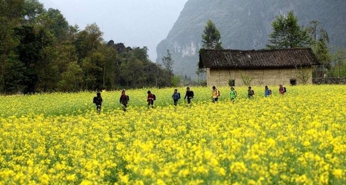 Mùa hoa cải vàng ở Hà Giang tháng 11-12