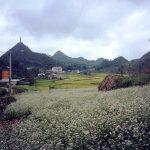 Kinh nghiệm đi phượt Hà Giang ngắm hoa tam giác mạch
