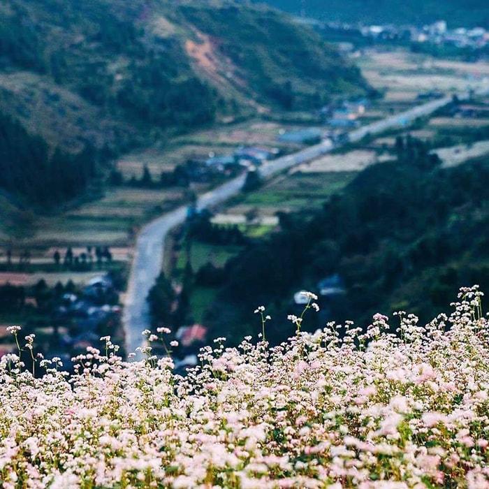 Thung lũng Sủng Là là nơi ngắm hoa tam giác mạch đẹp nhất Hà Giang