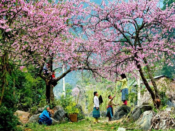 Đi phượt Sapa mùa xuân ngắm hoa đào
