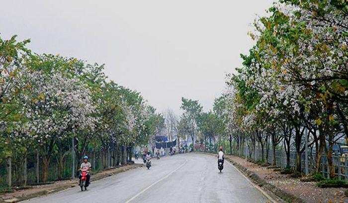 Con đường tình yêu ở Điện Biên ngập tràn hoa ban