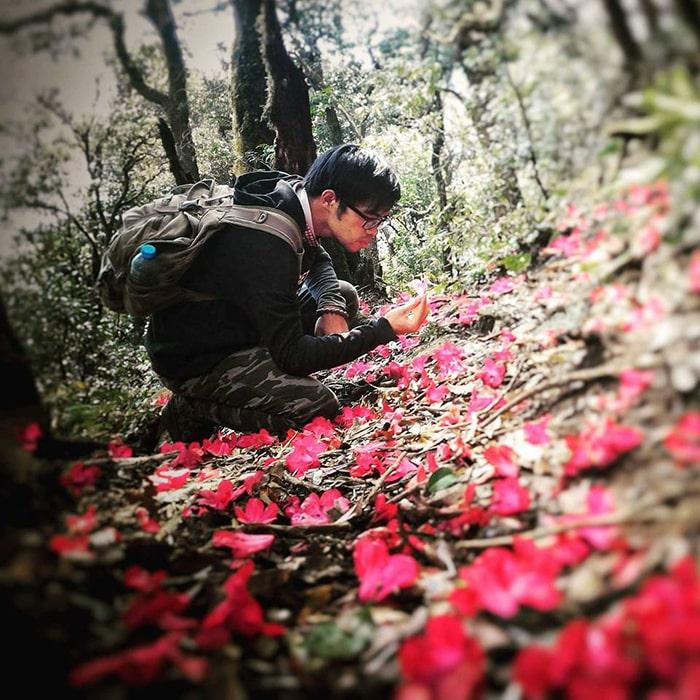 Tháng 3 là mùa hoa đỗ quyên nở ở Sapa