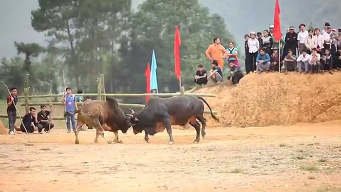 Lễ hội chọi bò ở Mèo Vạc tháng 4