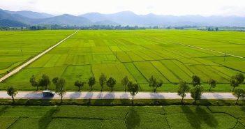 Khám phá lịch sử và vẻ đẹp mê hồn của cánh đồng Mường Thanh