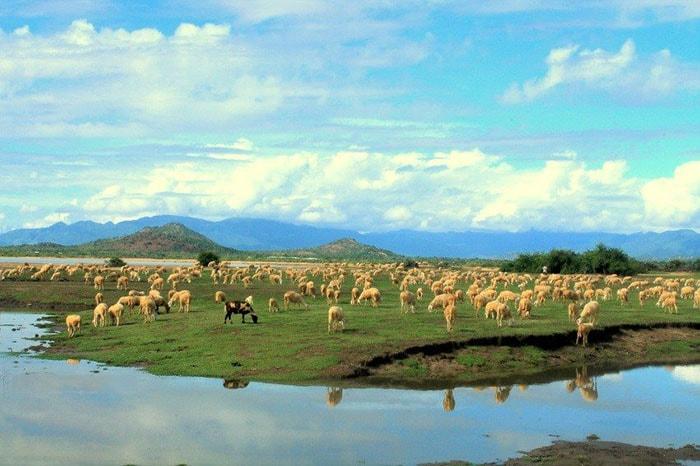 Đồng cừu An Hòa Ninh Thuận