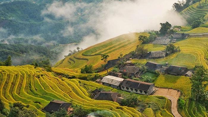 Mùa lúa chín trên bản Phùng ở Hoàng Su Phì