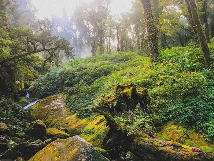 Khu rừng cổ tích trên đường trekking Nhìu Cồ San