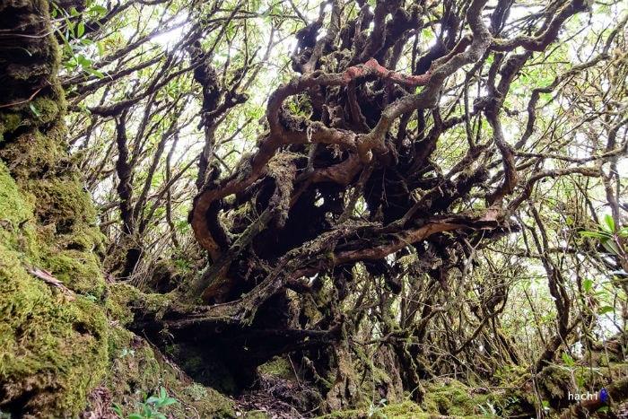 Khu rừng cổ tích ở Tả Liên Sơn