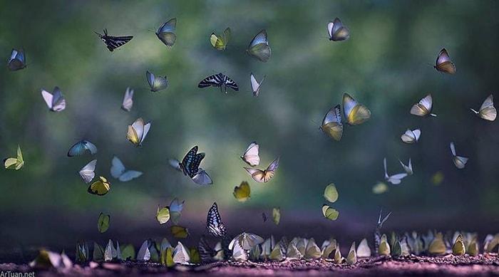 Mùa bướm ở vườn quốc gia Nam Cát Tiên