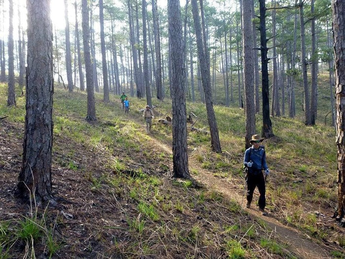 Trekking Bidoup - Núi Bà Lâm Đồng