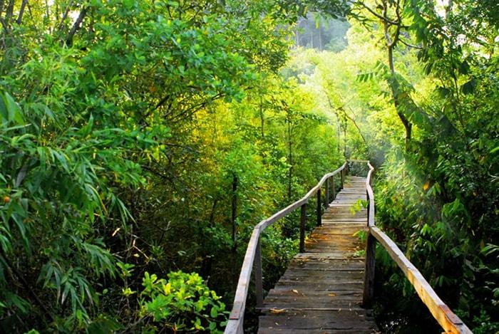 Vườn quốc gia Nam Cát Tiên ( Đồng Nai)
