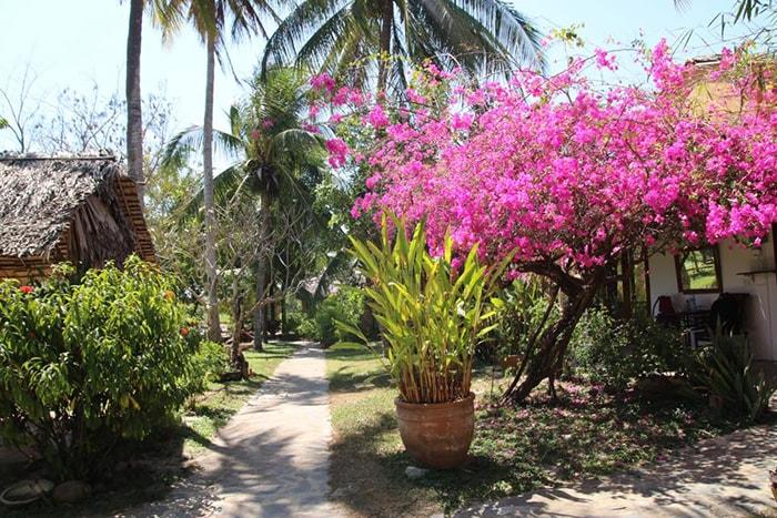 Giàn hoa giấy tuyệt đẹp ở Coco homestay Lagi