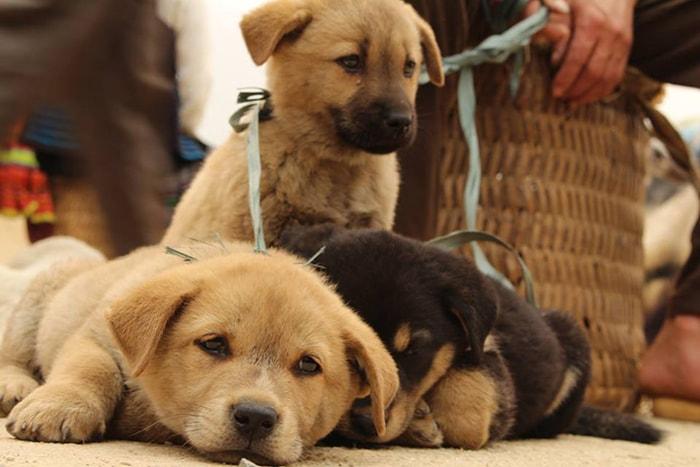 Những chú cún được bán ở chợ Đồng Văn