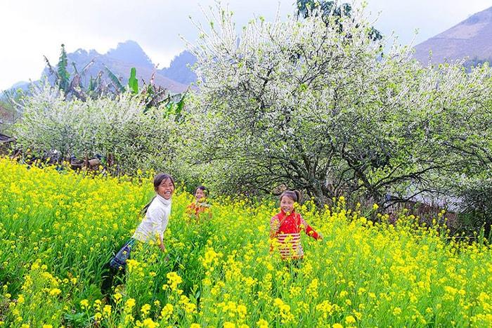 Mùa hoa cải ở Hà Giang