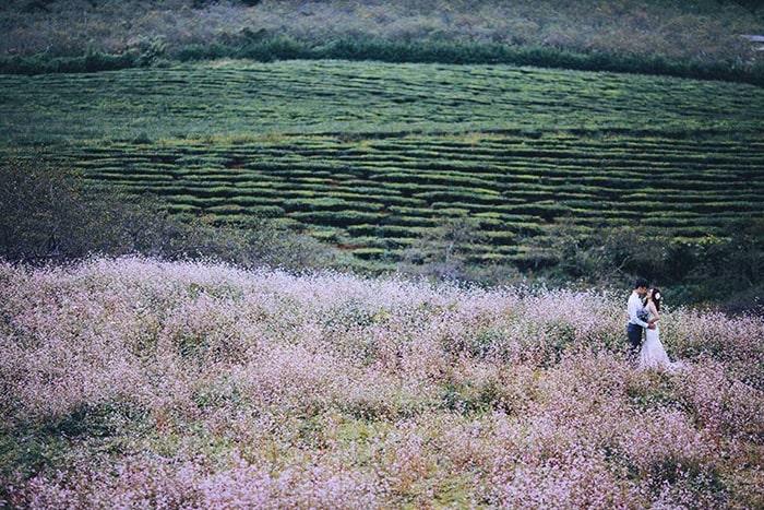 Mùa hoa tam giác mạch ở Mộc Châu