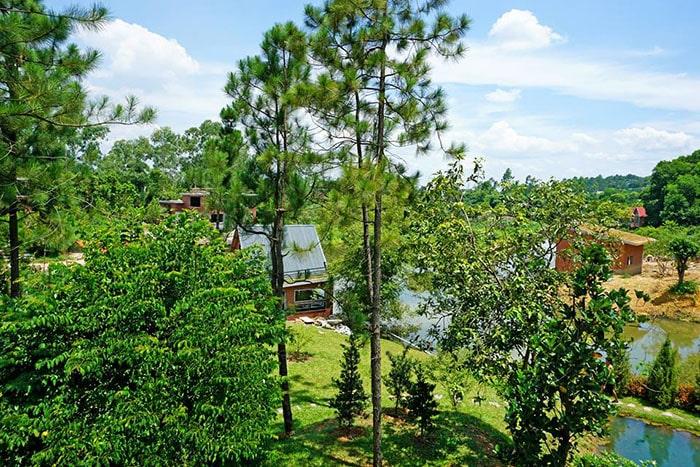 Không gian xanh mướt ở khu cắm trại Nhà bên Rừng