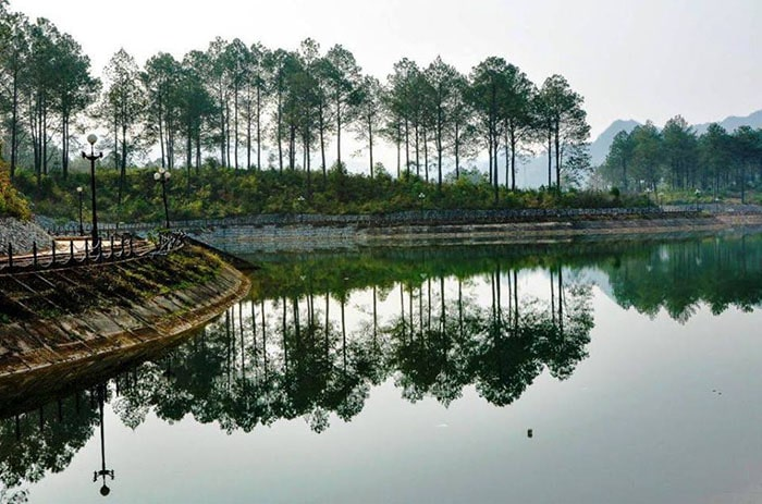 Rừng thông bản Áng - Mộc Châu