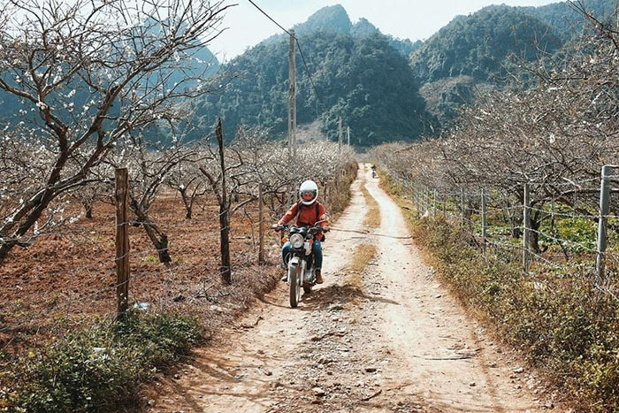 Đường vào thung lũng mận Nà Ka, Mộc Châu