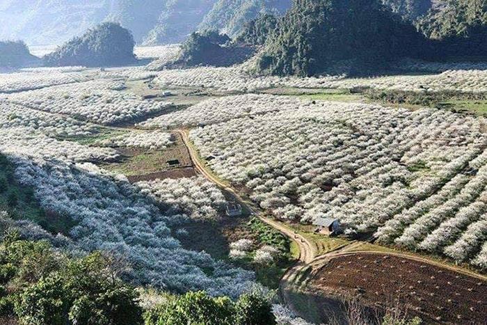 Thung lũng mận Nà Ka, Mộc Châu